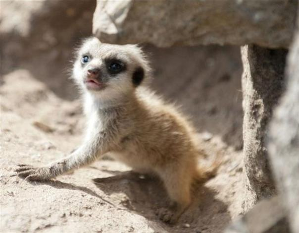 Top 10 Baby Animals From Zoos of the World3