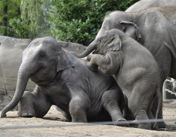 Top 10 Baby Animals From Zoos of the World7