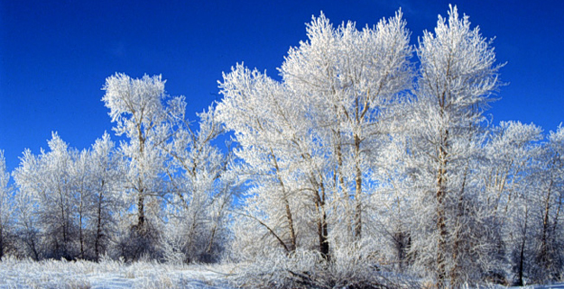 coldest places in the us