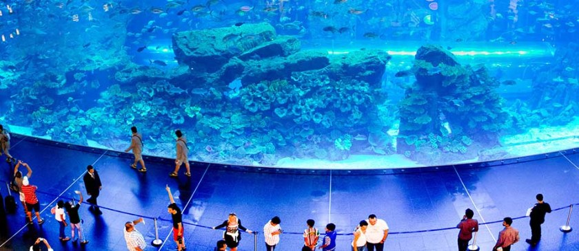 Most Amazing Aquarium in the World