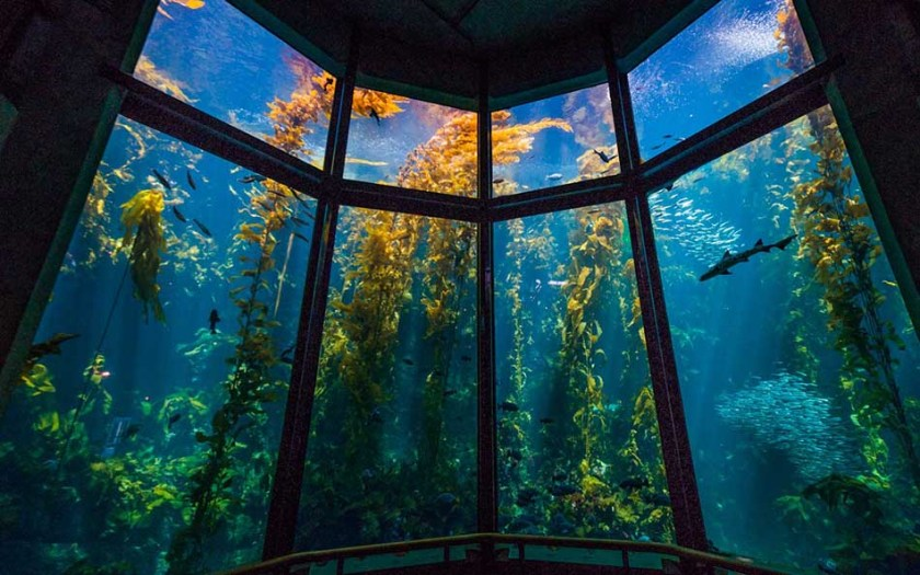 Top 10 Most Amazing and Best Aquariums in the World