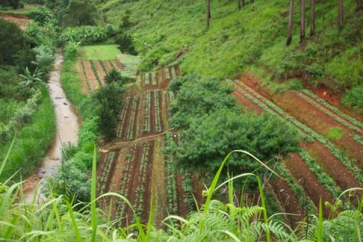 Terraced_Coffee_Plants_in_Vietnam_top_producer