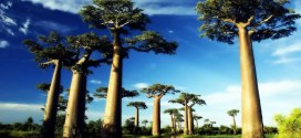 Top 10 Most Endangered Plants on Earth