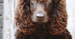 Top 10 Unusual Dog Breeds That Don't Shed