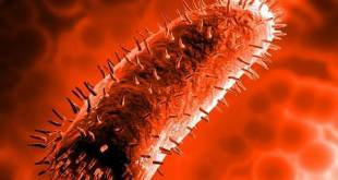 Top 10 Most Dangerous Viruses the World Has Known