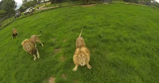 poaching-drones