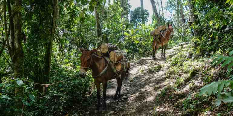 Donkeys on the Cocora Valley hike, Colombia