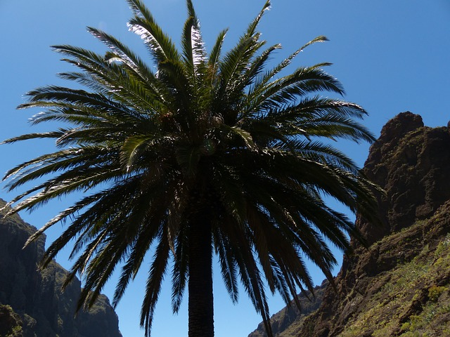 Canarische eilanden aanbiedingen