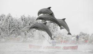 winter dolfinarium aanbieding
