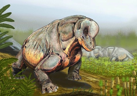 Tapinocephalus