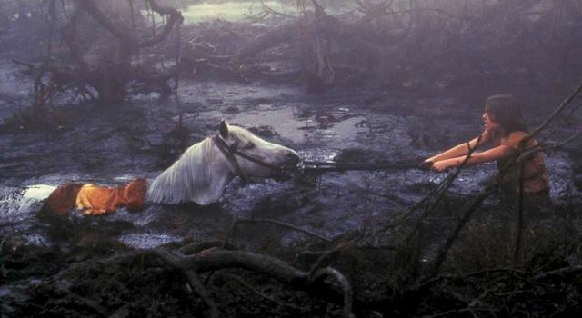 artax-swamp