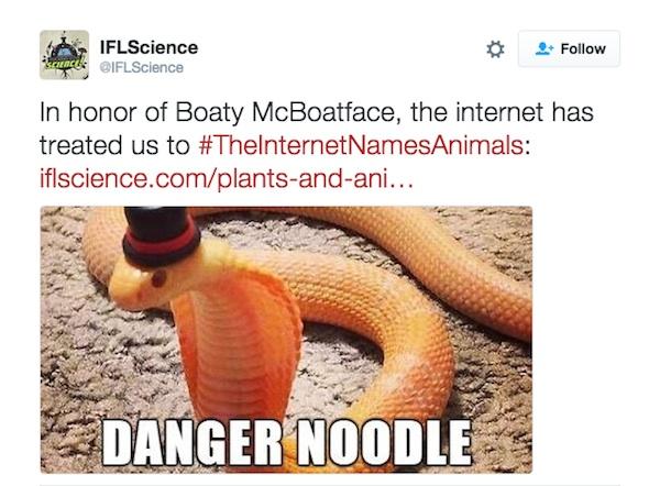 Danger Noodle