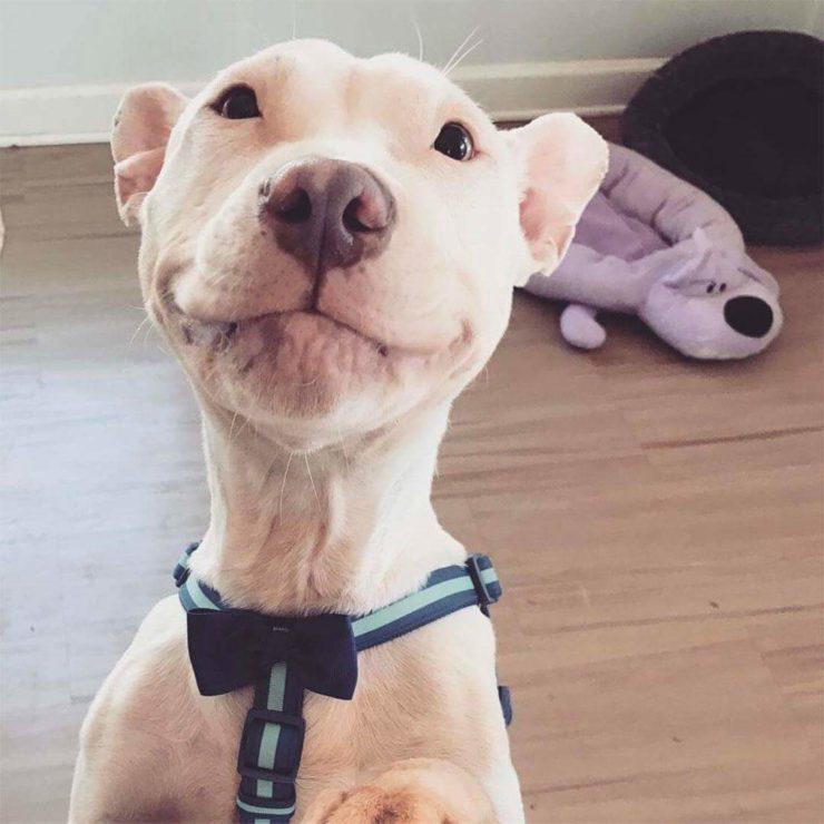 this dog looks like patrick stewart torcom