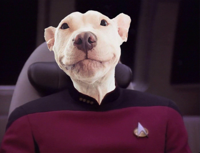 Blanco Patrick Stewart dog