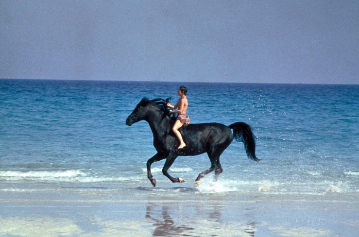 Blog Post Featured Image - Racing the Wind with The Black Stallion