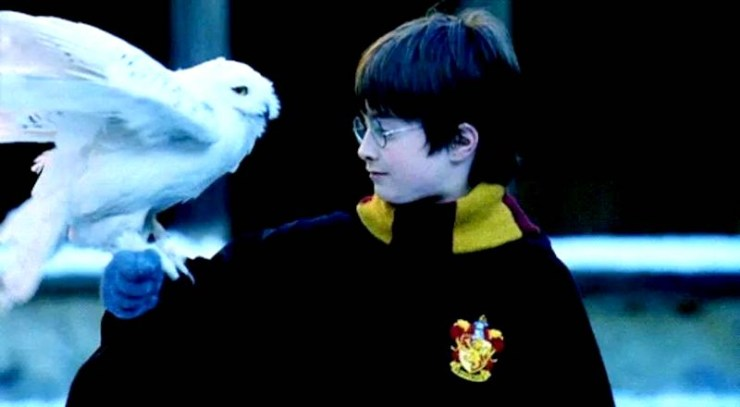 Harry Potter, Harry and Hedwig