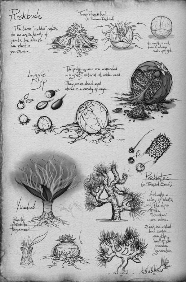 WoK Shallan's sketchbook 5- Rockbuds