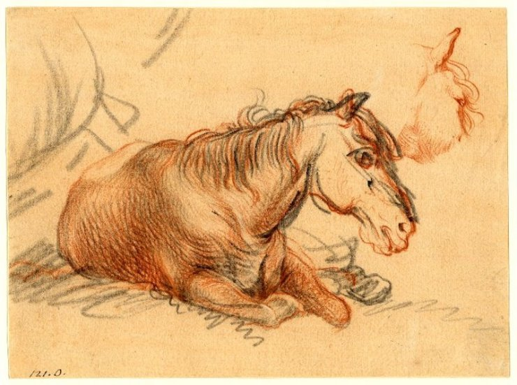 Blog Post Featured Image - Understanding Horses: Caring for Wise Elders