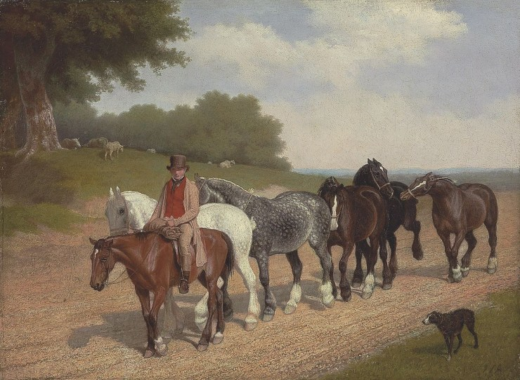 Blog Post Featured Image - Understanding Horses: Riding as Cooperation