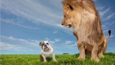 Photo de Ne pas craindre son ennemi…