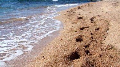 Photo de Mouktsé Mékhamat Gouffo: Le sable et la boue (cour n°5)