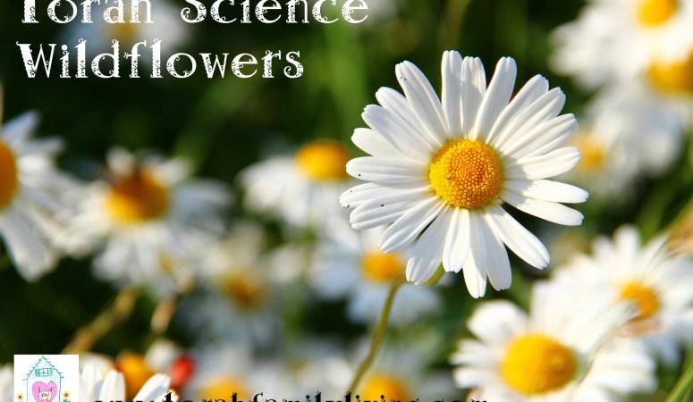 Torah science – wildflowers