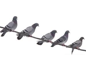 Fem duer på en tråd