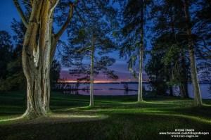 Trærne på Tallodden lyst opp av en blits fra forskjellige vinkler (lysmaling)