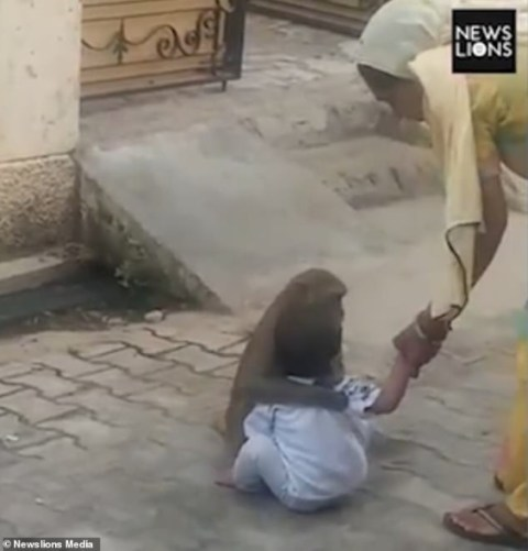 Monkey Kidnaps 2-year-old Boy, Forces Him To Play With It (Photos+Video) 2