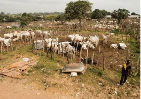 , Nigerian Government Approves N91billion For Grazing Reserves, No. 1 Information Arena