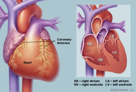 Early menopause and heart disease