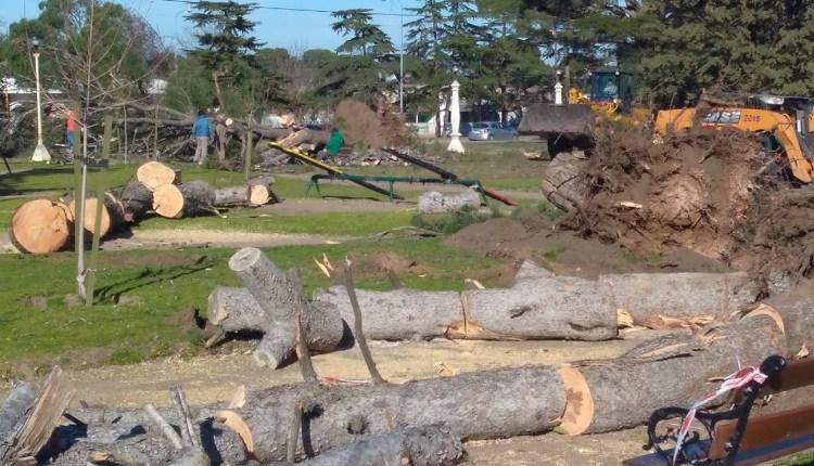 Tornquist – En la Plaza se lleva a cabo, la última etapa de extracción de árboles