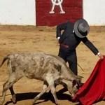 Morante de la Puebla tienta en Prieto de la Cal