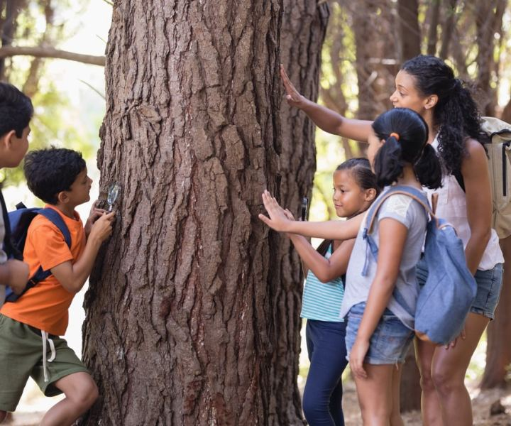 Teacher and children touching tree trunk in forest during field trip