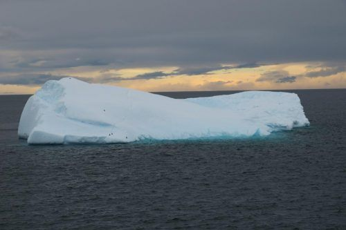 Eisber mit Pinguinen