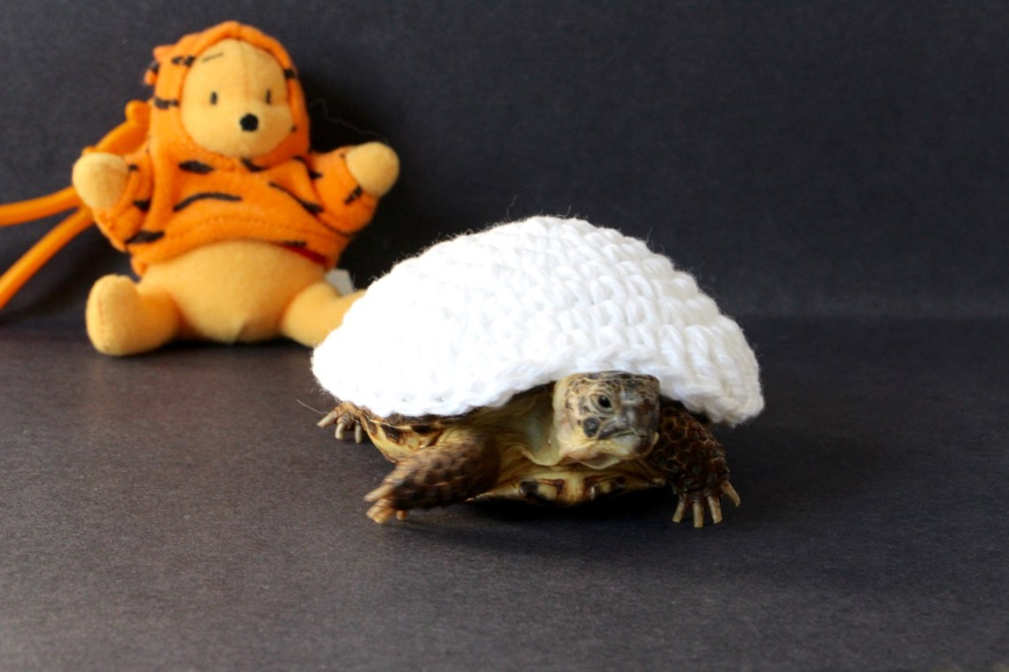 Mom even makes my costume curve in the front like my shell!