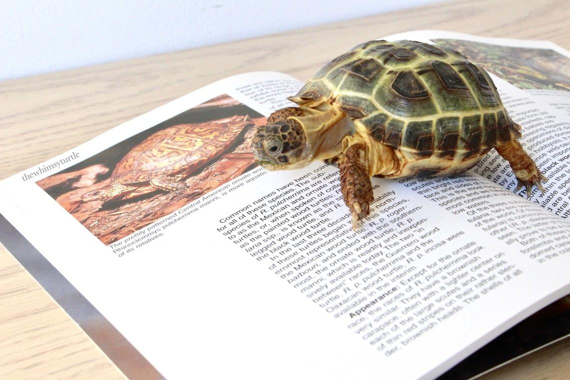 Aquatic?  You mean this turtle likes baths?!