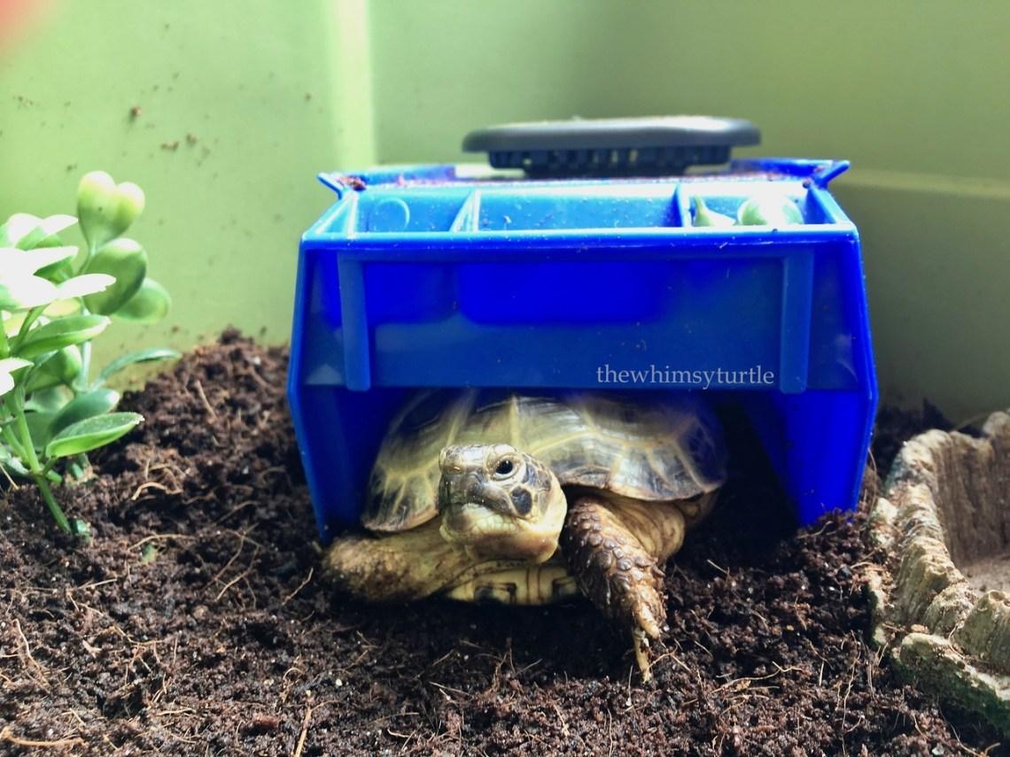 Shello, camera!