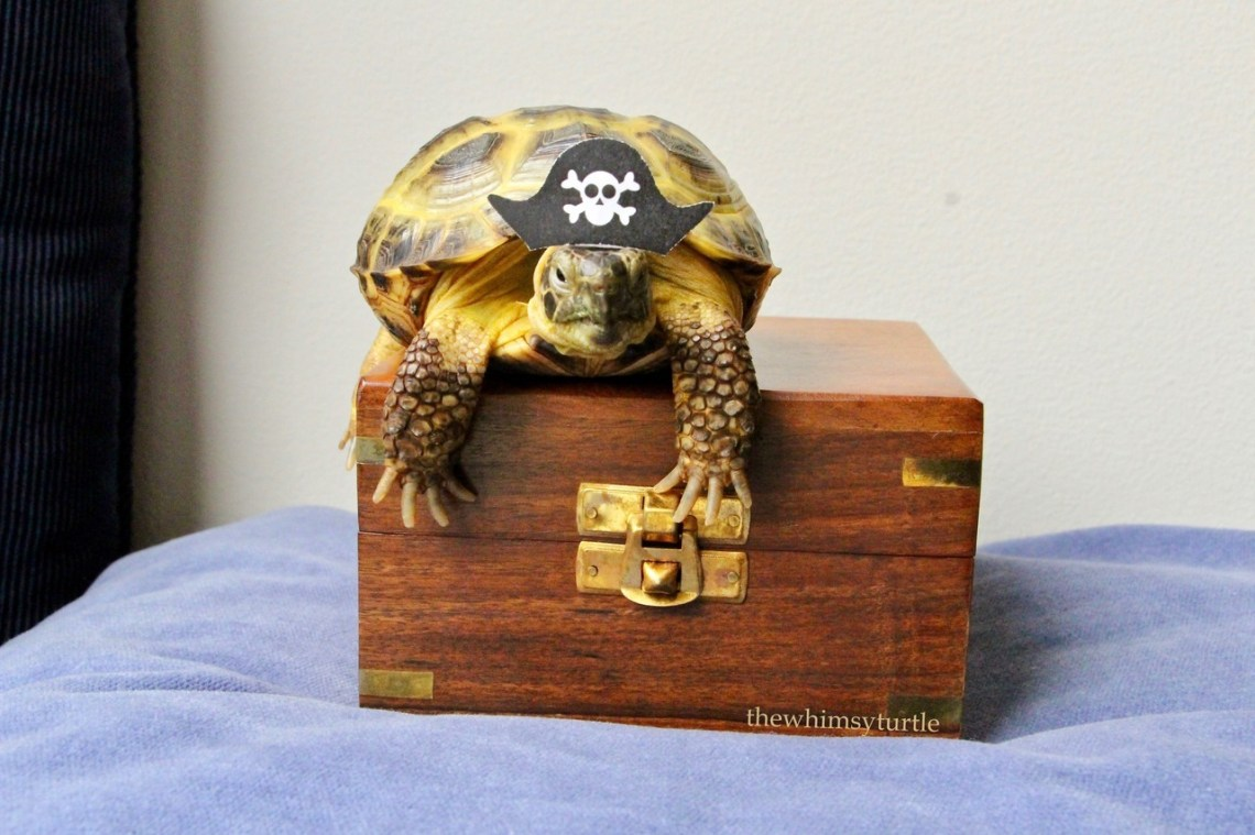 Open up this treasure chest, ye bilge rat!