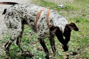 Luky nel parco di Villa Borbone (Viareggio)