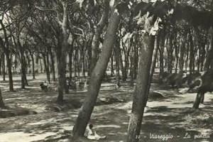 Pineta di Viareggio (foto storica)