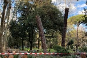 La pineta di Viareggio nel 2021