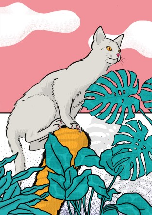 my cat the jungle explorer illustration