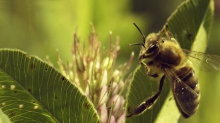 More than Honey (foto: Das FilmFest)