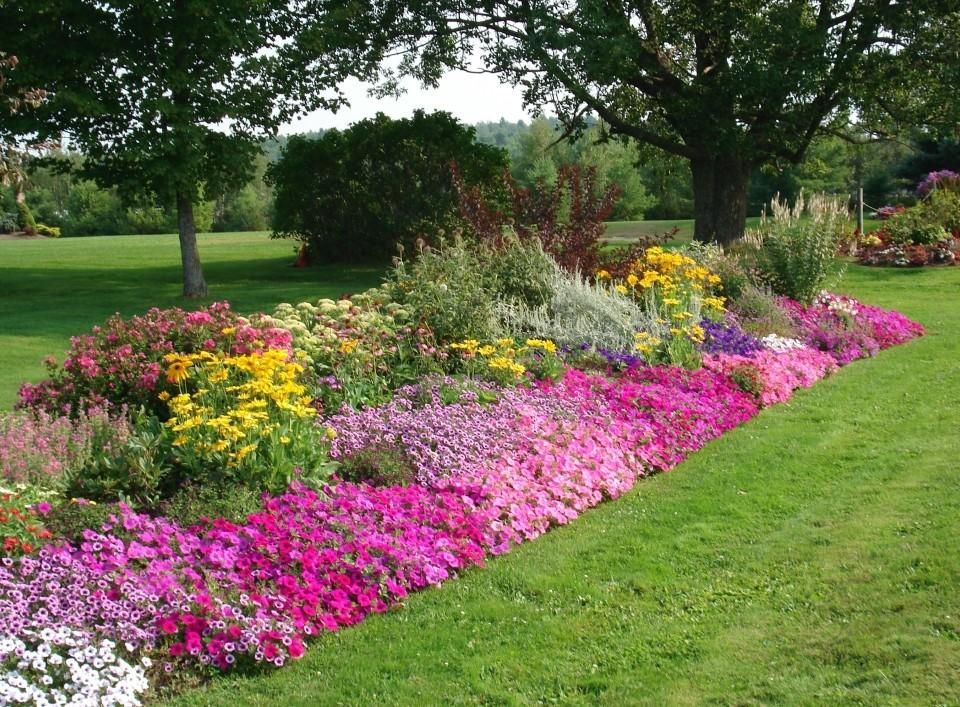 When Best Time Start Vegetable Garden