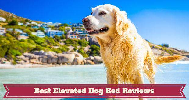 Best elevated dog bed reviews written beneath a GR in a tropical looking ocean