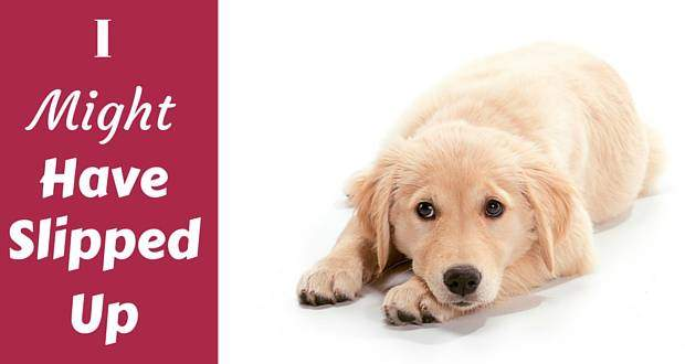 A sad looking golden retriever puppy lying down on white background