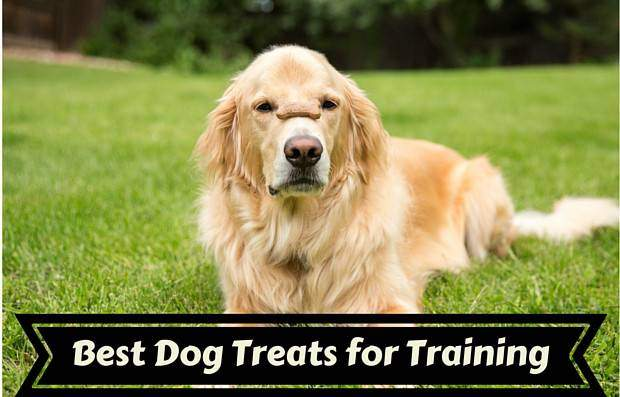 Best dog treats for training written under a golden with treat on it's snout