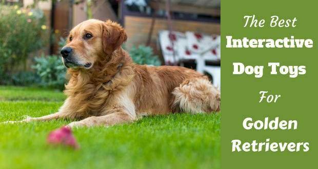 Best interactive dog toys writte beside a golden retriever in long green grass