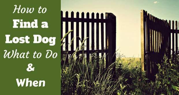 How to find a lost dog written beside an open garden gate